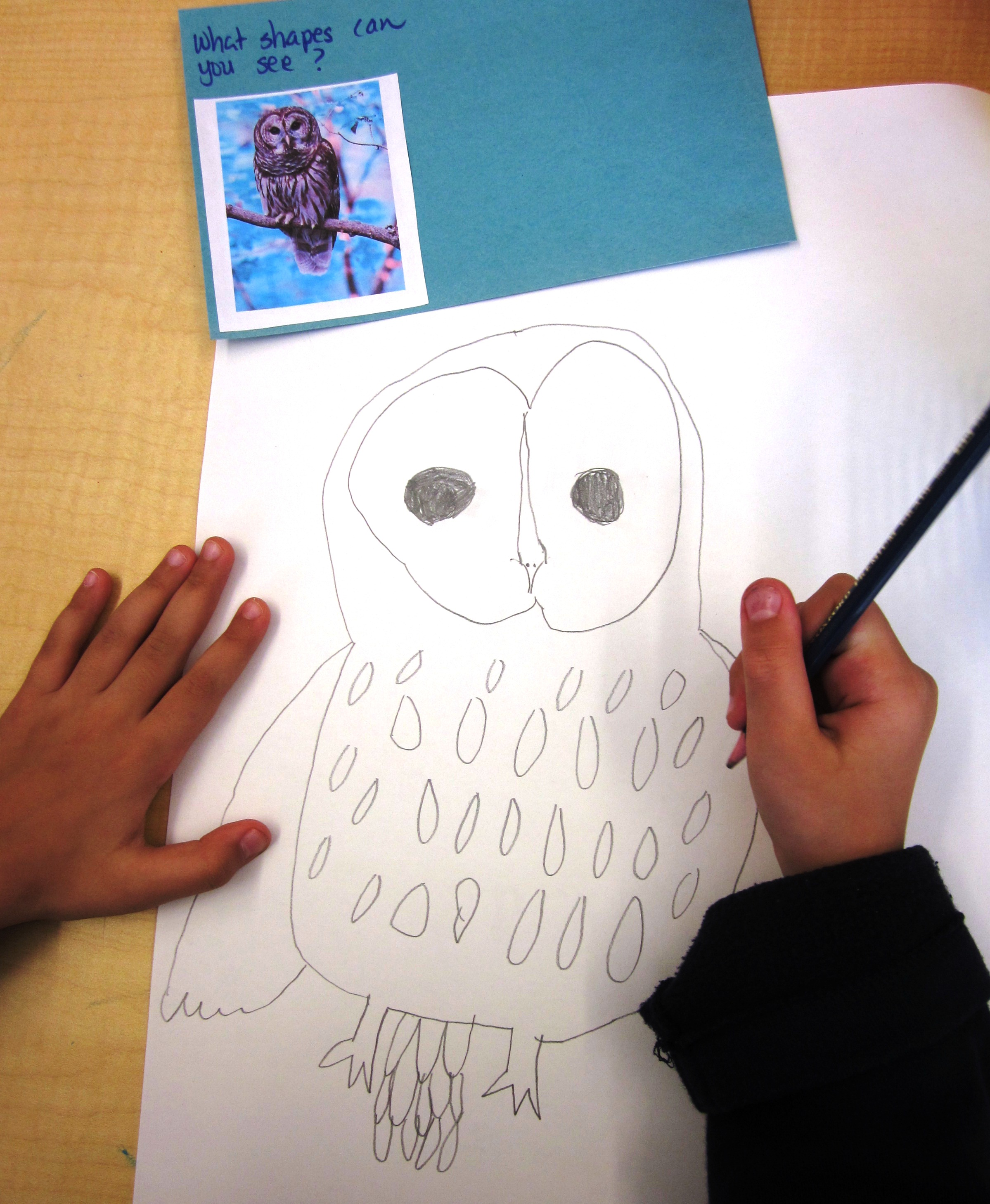 Learning How to Draw in Grade One   Alejandra Chavez
